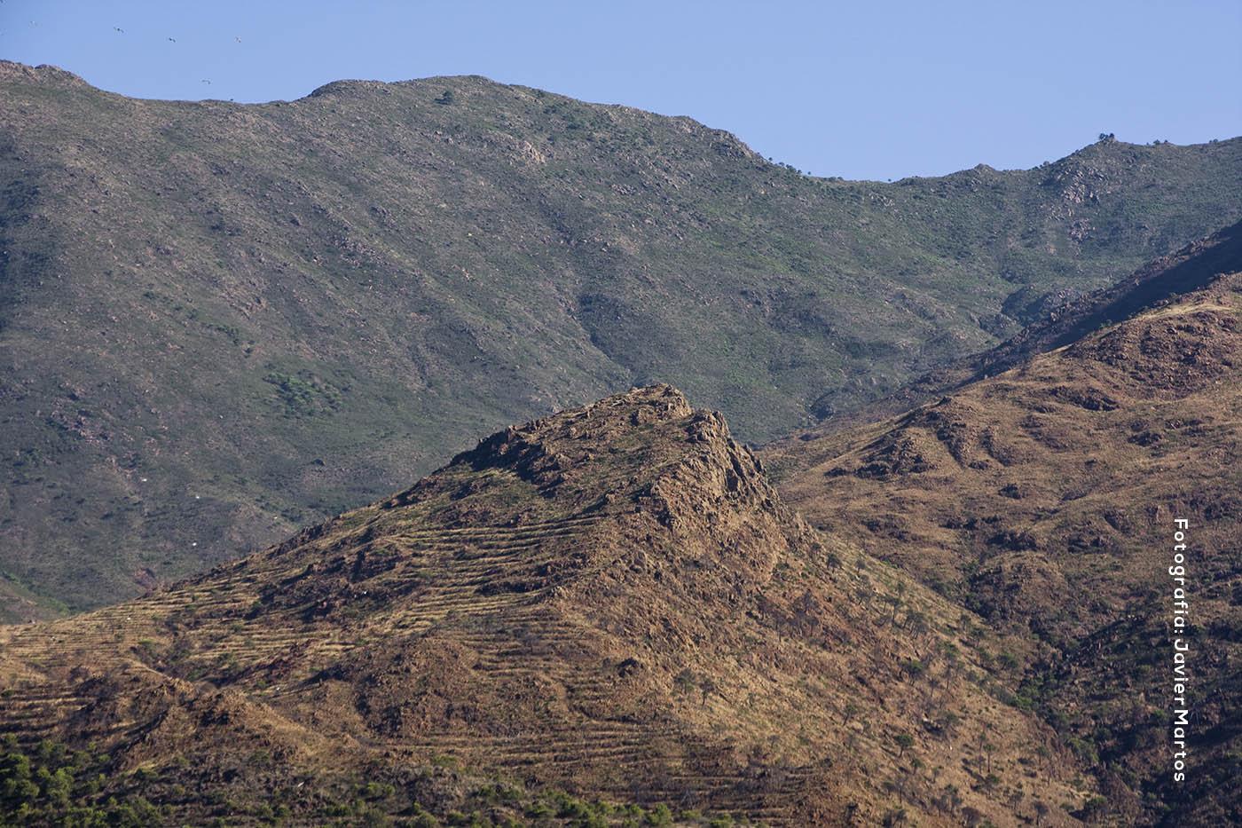 Cerro del Águila (Estepona)